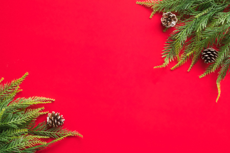Christmas tree branches on red background. Free space for text