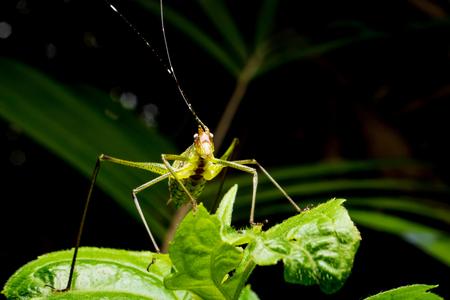 녹색 잎에 메뚜기의 닫습니다.