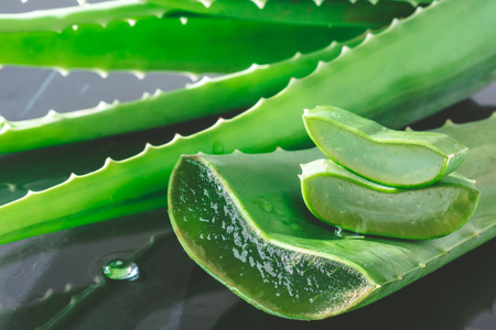 Aloe vera plant. Aloe vera is used in traditional medicine as a skin treatment.