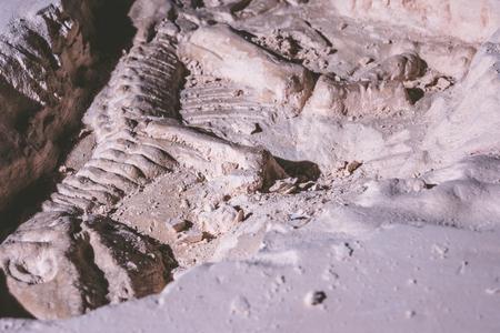 恐竜の骨格。地石のティラノサウルスレックスシミュレータ化石。