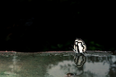 Butterflies on cement ground. reflected in water