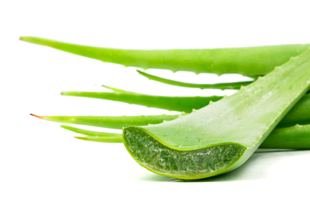 Aloe vera plant on white background. Aloe vera is used in traditional medicine as a skin treatment.
