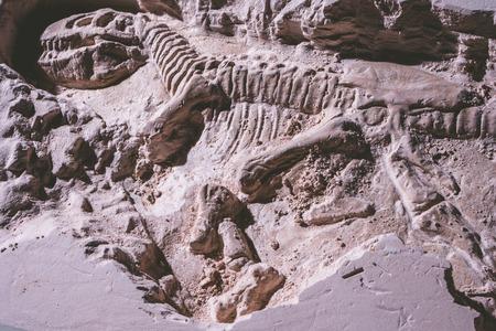 Skeleton of dinosaur. Tyrannosaurus Rex simulator fossil in ground stone.