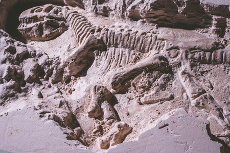 Skeleton of dinosaur. Tyrannosaurus Rex simulator fossil in ground stone.