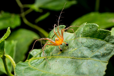 Spider on green leaf in the park