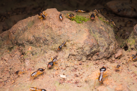 Termites or white ants on the ground in rainforest Banco de Imagens