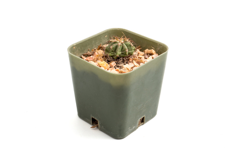 Small cactus in a flowerpot on white background Фото со стока