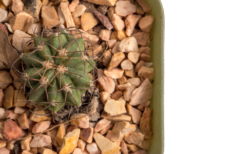 Top view of small cactus in a flowerpot on white background 写真素材