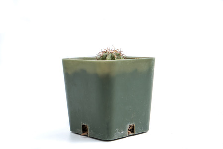 Small cactus in a flowerpot on white background Stock Photo