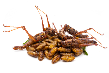 Close up of fried insects on a white background Imagens