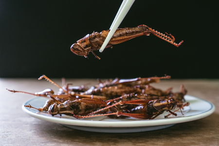 Fried insects in dish on wooden table with black background. selective focus 写真素材