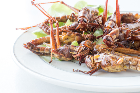 Close up of Fried insects in dish on white background 写真素材 - 100765297