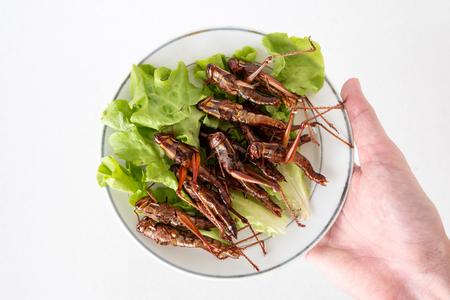Mano sujetando insectos fritos en un plato sobre fondo blanco.