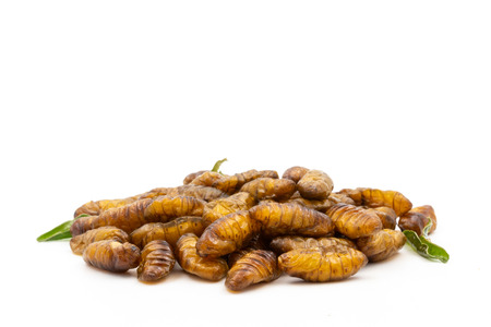 Close up of fried insects on a white background Stock Photo