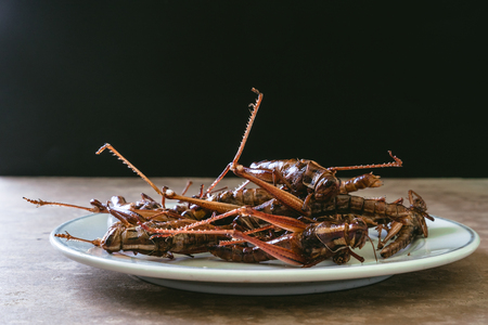 Fried insects in dish on wooden table with black background