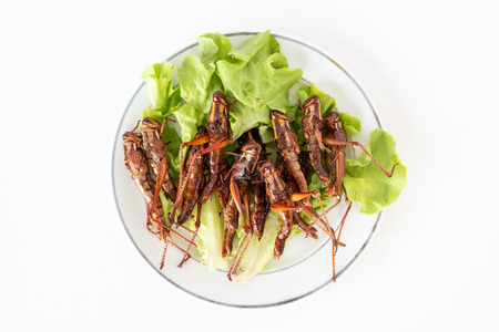 Top view of Fried insects in dish on white background 写真素材 - 101201343