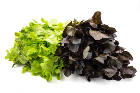 Red and green oak lettuce on a white background