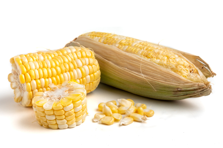 Fresh sweet corn on a white background