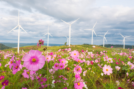 Field of cosmos flowers with wind turbines and clouds sky