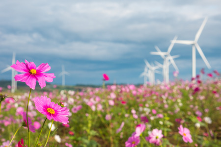 Field of cosmos flowers with wind turbines and clouds sky background. Standard-Bild