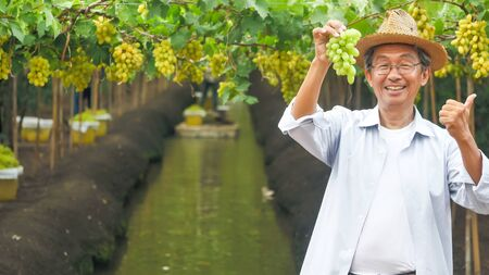 Happy farmer holding a bunch of grapes in vineyard. 写真素材