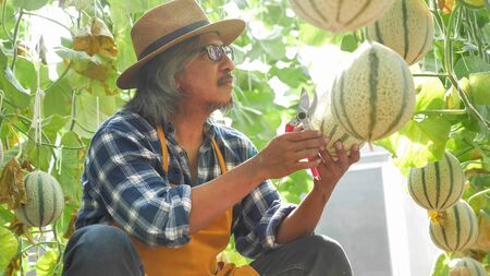 Happy farmer holding melon in a farm.