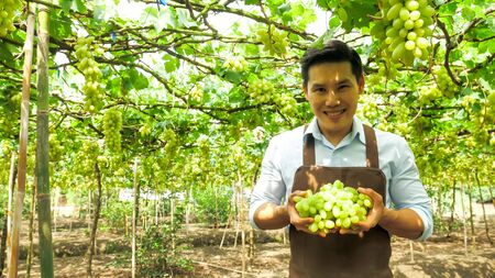 Happy farmer holding bunch of grapes in vineyard.