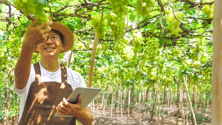 Happy farmer holding a tablet and a bunch of grapes in vineyard. 写真素材