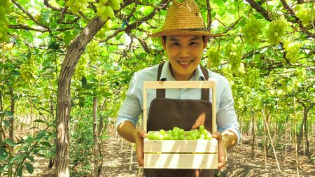Happy farmer holding a basket of grapes in vineyard.