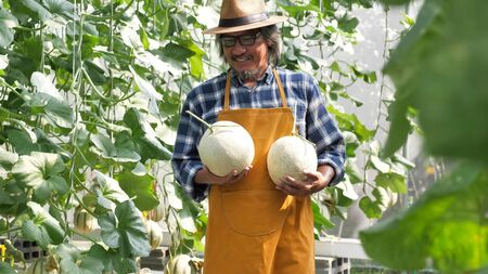 Happy farmer standing and holding melons in a farm.