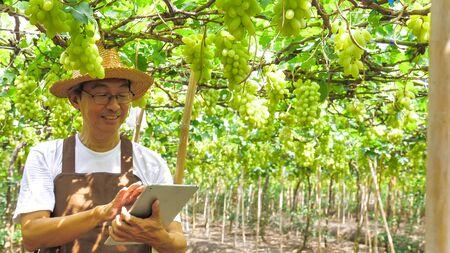 Happy farmer holding a tablet in vineyard.