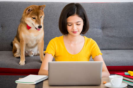 Asian woman working on a laptop computer and shiba inu dog sitting on a sofa at home