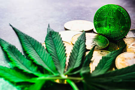 Golden coins with crypto currency symbol and cannabis leaves. Archivio Fotografico