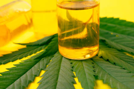 Cannabis oil in the vials with green leaves on yellow background. Alternative medicine concept. Archivio Fotografico