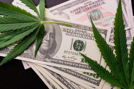 The cannabis plant on US dollars.  Money with marijuana leaves. Archivio Fotografico