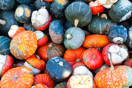 Colorful miniature pumpkins on sale at a local farmer's market for Thanksgiving. Autumn theme background. Stok Fotoğraf