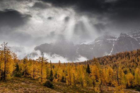 黄金のカラマツはドット レイクルイーズ、アルバータ州、カナダの近くのカラマツ谷の秋の風景です。太陽の光は、霧がバック グラウンドで 10 の