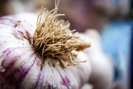 Close-up macro of fresh garlic bulb focus on roots with deliberate shallow depth of field and copy space.
