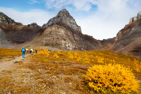 Hikers walking along the base of Pinnacle Mountain among the golden Larch trees toward the ascend to Sentinel Pass at Lake Louise in Banff National Park, Alberta. Stockfoto