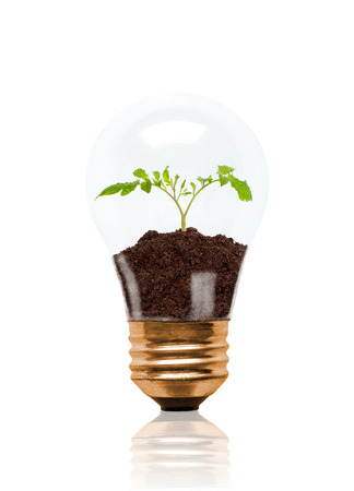 Young seedling growing out of soil inside light bulb. Concept of new life or beginning; environmental conservation, ecology or green movement. Isolated on white background. Stock Photo