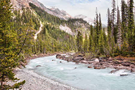 Glacier-fed waters from Takakkaw Falls flow into Kicking Horse River through Yoho National Park near Field, BC, in the Canadian Rockies of Alberta near Banff.
