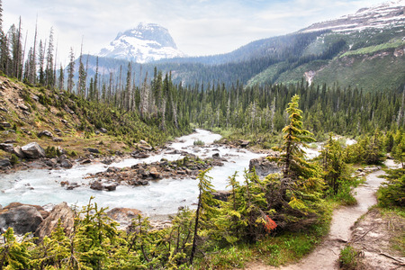 Glacier-fed waters from Takakkaw Falls flow into Kicking Horse River through Yoho National Park near Field, BC, with Wapta Mountain in the background covered by low clouds. Stok Fotoğraf