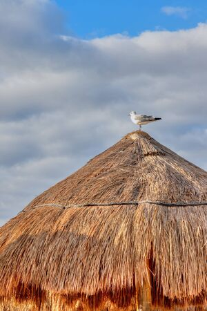 Seagull bird standing on a coconut palm leaf hut in the Caribbean beach coast of Cancun, Mexico, with copy space
