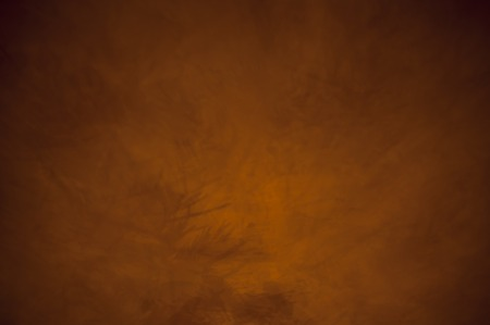 Christmas tree branch shadows abstract background