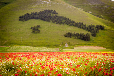 Castelluccio di Norcia, Umbria, Italy. Piana Grande Valley landscape full of flowers Stock Photo