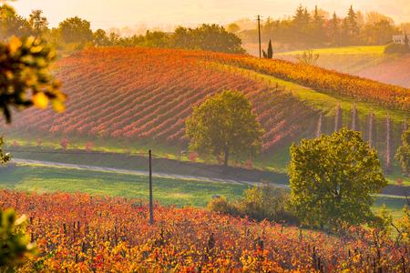 Castelvetro, Modena, Emilia Romagna, Italy. Sunset over the Lambrusco Grasparossa vineyards and rolling hills in autumn Фото со стока