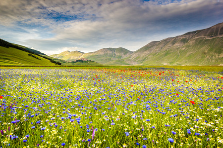 castelluccio di norcia: Castelluccio di Norcia, Umbria, Italy. Piana Grande Valley landscape full of flowers Stock Photo