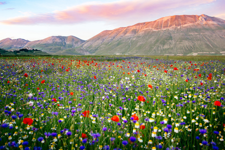 castelluccio di norcia: Castelluccio di Norcia, Umbria, Italy. Piana Grande Valley landscape full of flowers with Monte Vettore in background Stock Photo