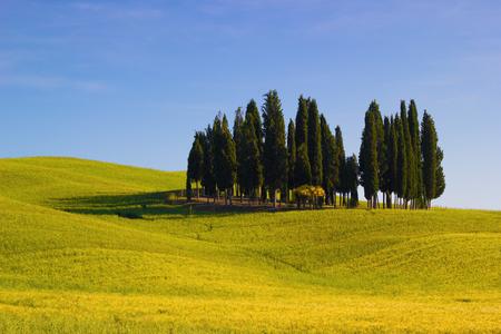 Tuscany, Italy. Val dOrcia landscape in springtime