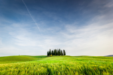 san quirico d'orcia: Tuscany landscape. Italy